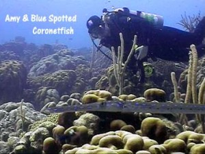 amy_bluespotted_coronetfish_web